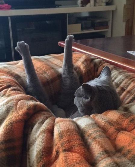 猫おもしろ画像-48