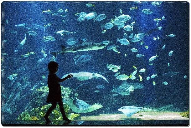 水族館 (3)Dot07