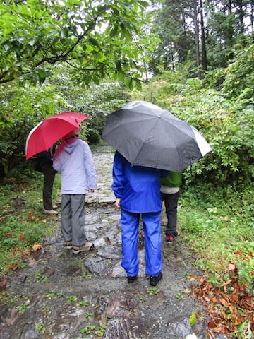 雨の自然情報大涌谷