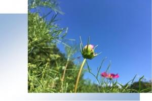 20170906空と花A