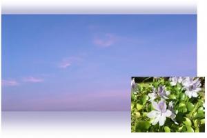 20170906空と花B