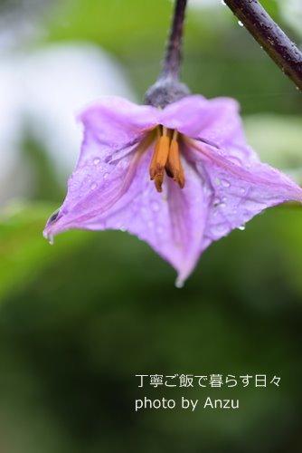 170929 なす花