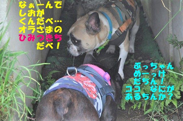 DSC_0017_20171011160346e87.jpg