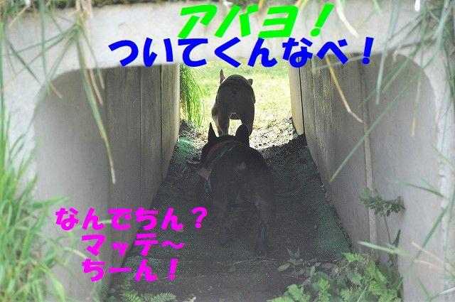 DSC_0019_20171011160349e38.jpg