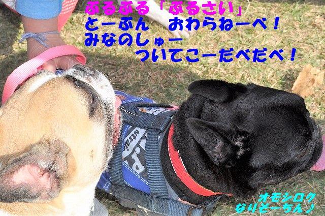DSC_0047_20171107095127fb5.jpg