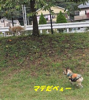 DSC_0049_20171013134742781.jpg