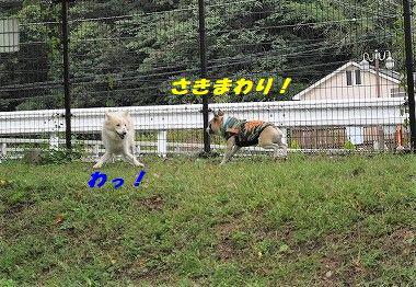 DSC_0053_20171013134748c9b.jpg