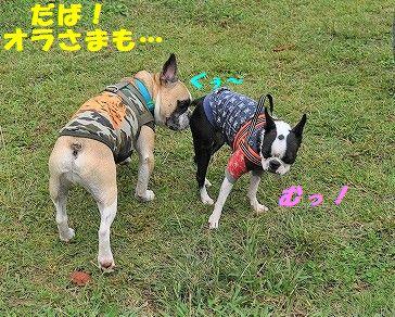 DSC_0064_20171013140806d2a.jpg