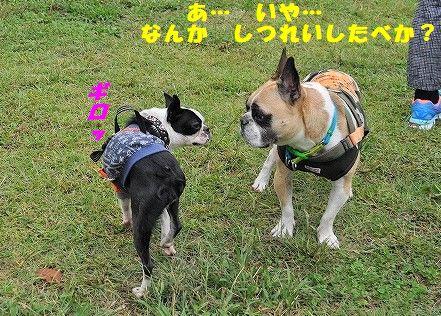 DSC_0065_20171013140807f9c.jpg