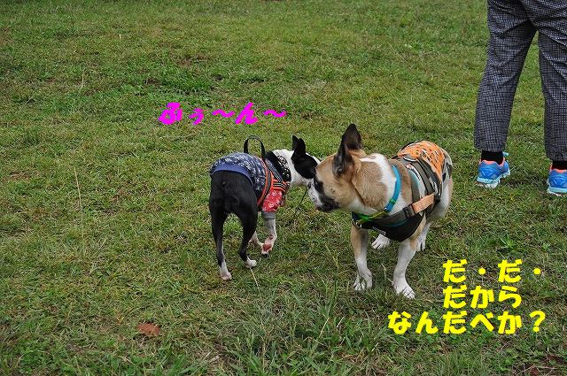 DSC_0066_20171013140809221.jpg