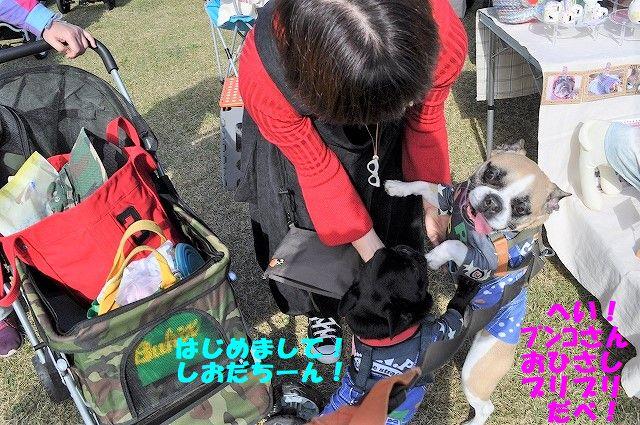 DSC_0067_20171113130039ff7.jpg
