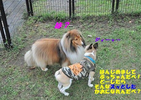 DSC_0071_20171013133922b28.jpg