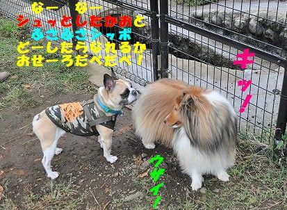 DSC_0072_2017101313392360f.jpg