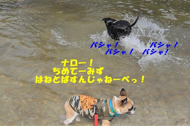 DSC_0097_20171016133558cfc.jpg
