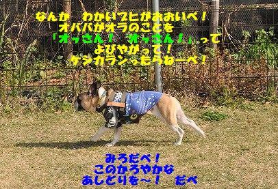 DSC_0099_20171106113707c0b.jpg