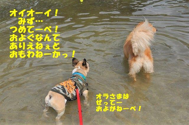 DSC_0108_201710161336025e9.jpg