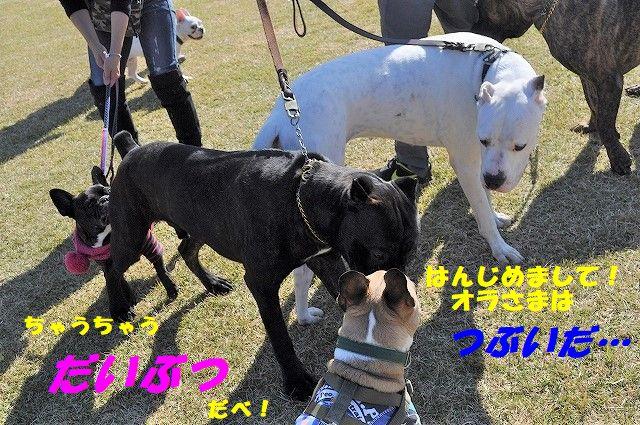 DSC_0131_201711101032462cb.jpg