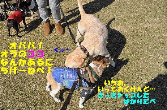 DSC_0144_20171110112701a88.jpg
