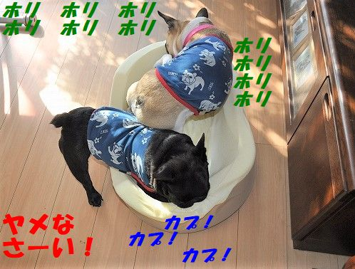 DSC_0169_20171010161906353.jpg