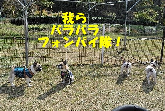 DSC_0234_20171109092321d10.jpg