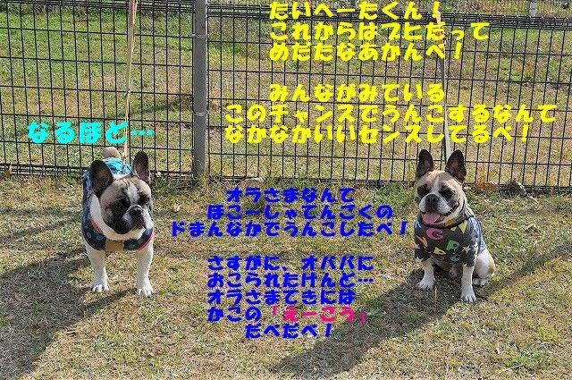 DSC_0236_20171109092322727.jpg