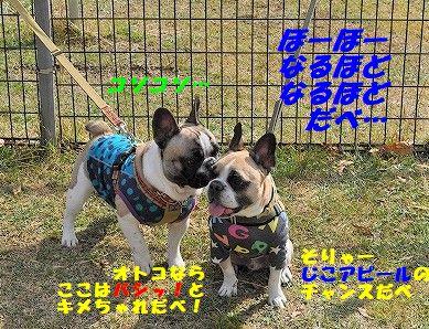 DSC_0249_2017110909232593a.jpg