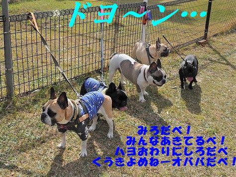 DSC_0264_20171109095802c16.jpg