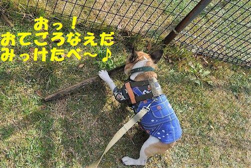 DSC_0267_20171109134233ff9.jpg