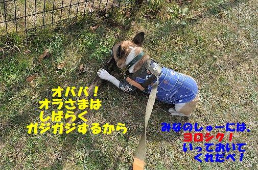 DSC_0268_201711091342353ca.jpg