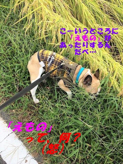 IMG_5463_2017092508550028c.jpg