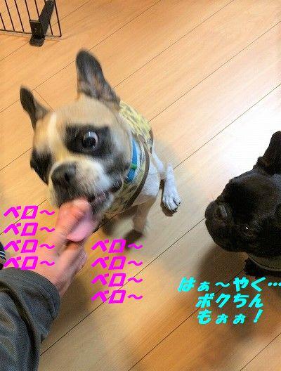 IMG_5615_201710051605067c9.jpg