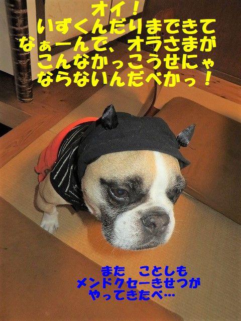 IMG_5941_201710251348506a4.jpg