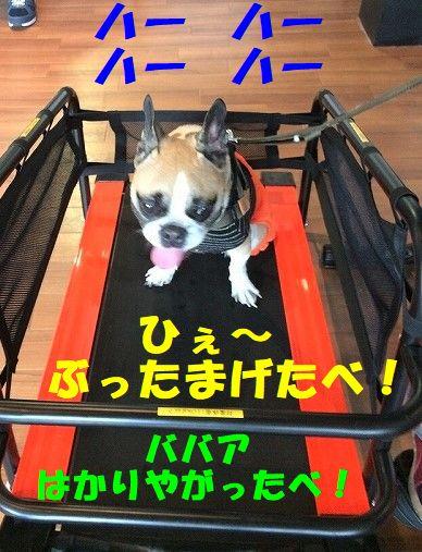 IMG_5962_20171026161256bd4.jpg