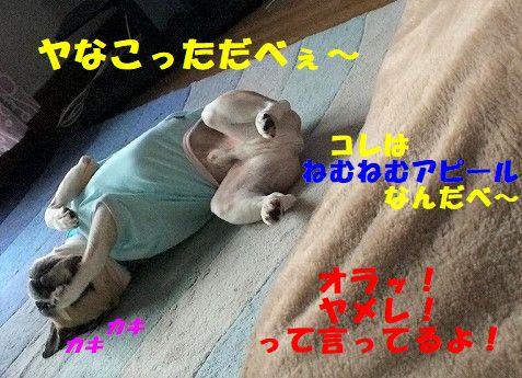 IMG_5997_20171116132017188.jpg