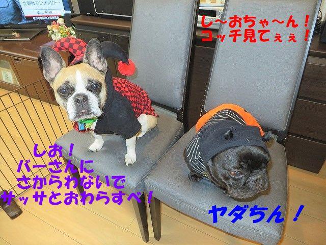 IMG_6033.jpg
