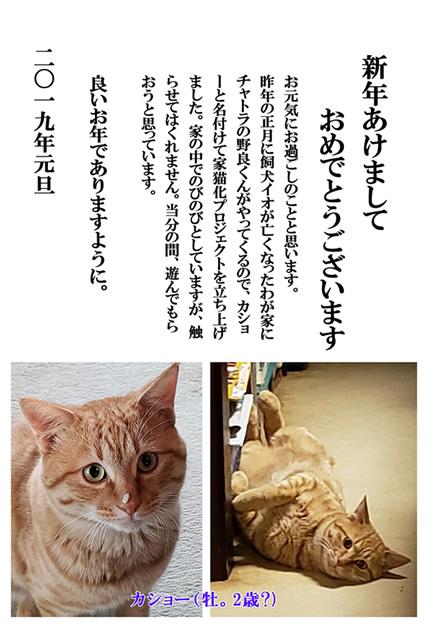 19年賀(カショー)