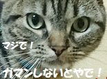 20170701131923fc0.jpg