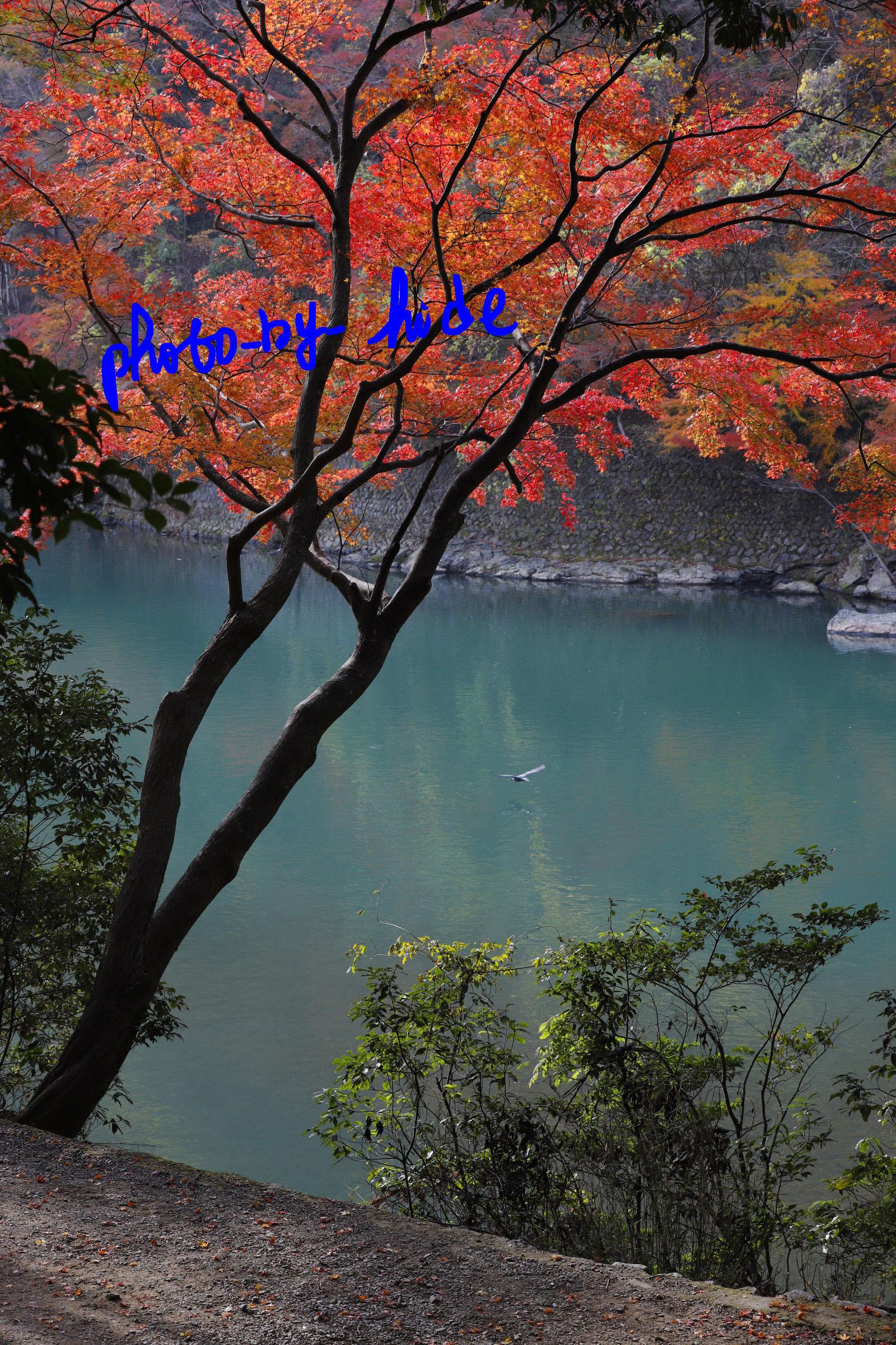 嵐山1本5