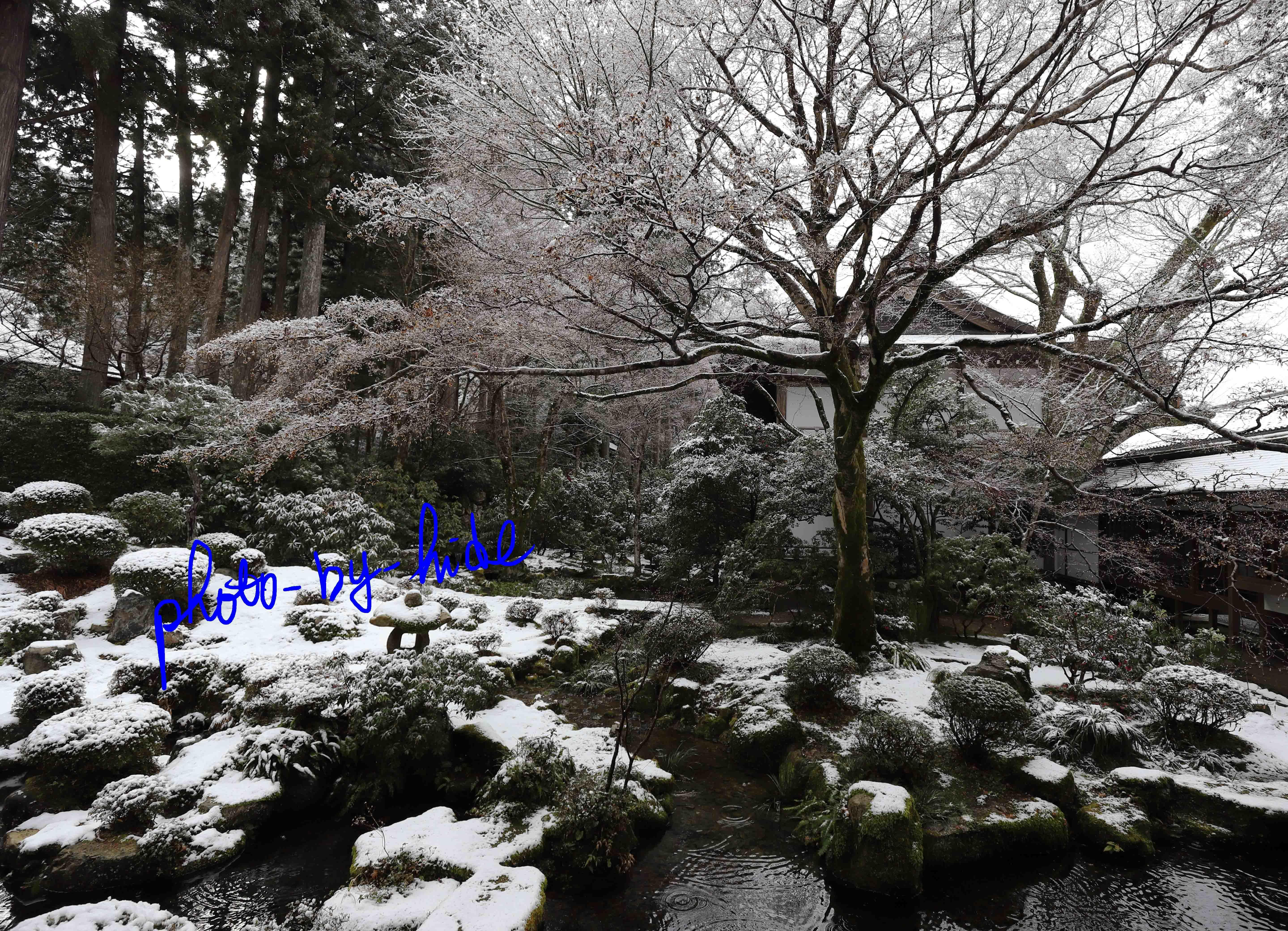 京都三千院3_edited-1