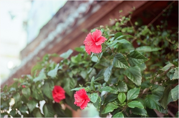 6-1---ジュピター3--沖縄-2017-9-29----22-28650022----portra160--9---_R