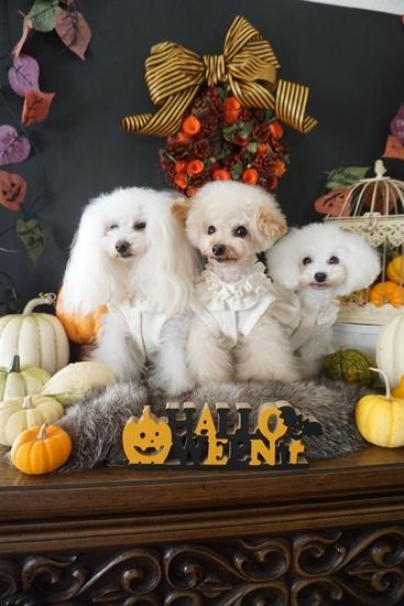 HalloweenB.jpg