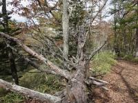 木も倒れた