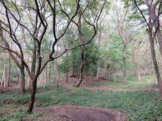 自然の森のような公園