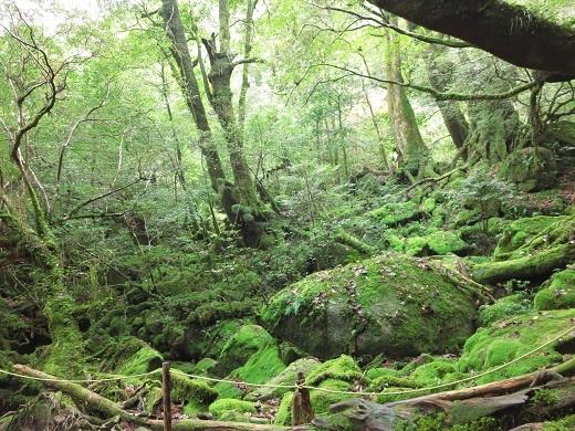 もののけ姫の苔の森