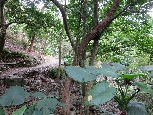 知本森林遊楽区