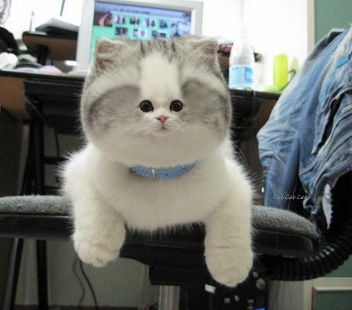 cat-smallface1.jpg