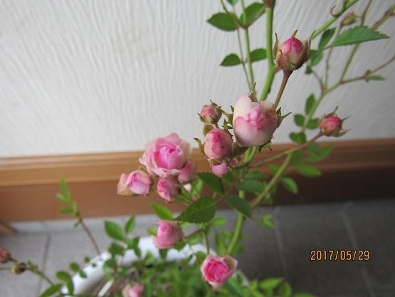 IMG_3225-17.jpg