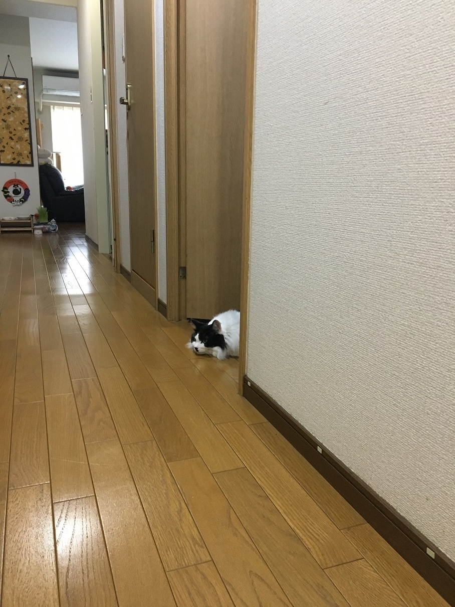 IMG_7440.jpg