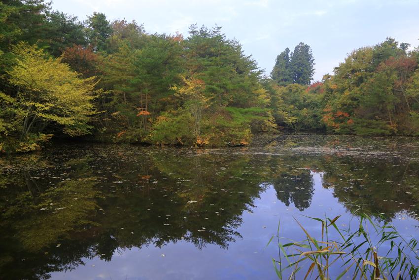 20171028水鏡に写り込む紅葉と木々