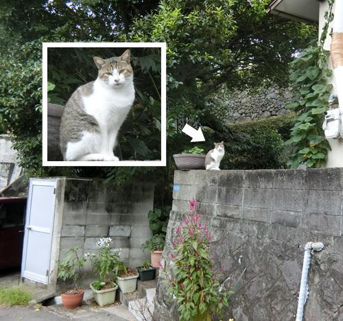 本日のネコ発見。